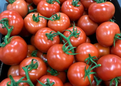 Bunches of ripe on vine tomatoes